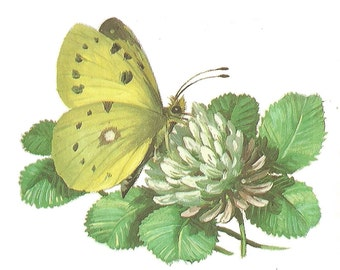 Yellow Butterfly Temporary Tattoo Vintage Book Illustration Floral