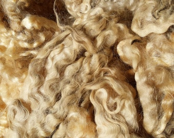 English Leicester Fleece • Raw, Unwashed Fleece, Spinning, Felting, Craft | per ounce