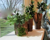 Small Wood Planter Set perfect for planting succlents!