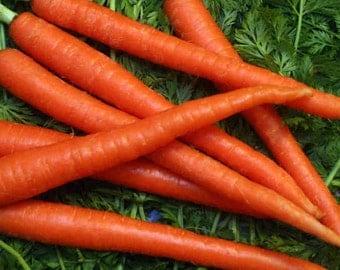 1,000 *HEIRLOOM* Scarlet Nantes Carrot Seeds
