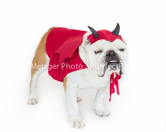 Devil English Bulldog Print, Fine Art Photography Print, Purrfect Pawtrait Pet Photography, Animal Photography