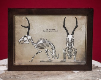 Jackalope Skeleton Faux-Scientific Print
