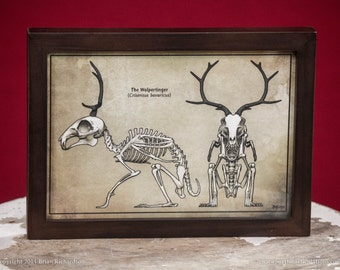 Wolpertinger Skeleton Faux-Scientific Print