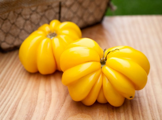 Yellow Ruffles Pleated Stuffing Heirloom Tomato Premium Seed