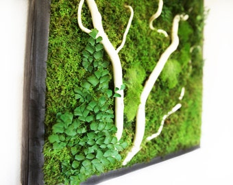 "Plant Painting®- No Care Green Wall Art. Real Preserved Plants. 18""x18"" Moss and Fern Art."