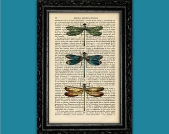 Dragonflies Vintage Colorful Art Print Insect Drangonfly Poster Dorm Room Print Gift Print Wall Decor Poster Dictionary Print Art (Nº7)