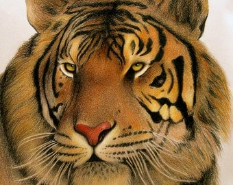 Tiger Colored Pencil Drawing animal wildlife illustration print wall art home decor safari artwork desert animal lion tiger cat painting