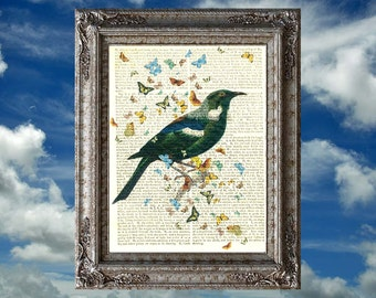 New Zealand Tui bird on an antique book page. 212 year old paper. Vintage text art.