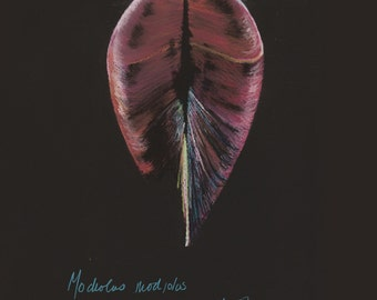 Print of an original pastel drawing of a seashell Modiolus modiolus