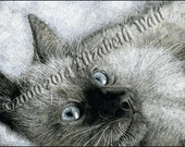 Blue Eyes Cat Print of Pen and Ink drawing, Signed and Numbered, Siamese Cat Print
