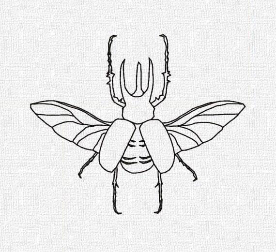 rhino beetle drawing animalcarecollege info Stink Bug rhino beetle drawing