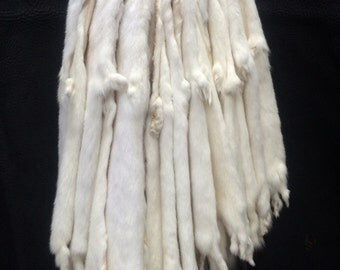 Tanned Ermine Pelts