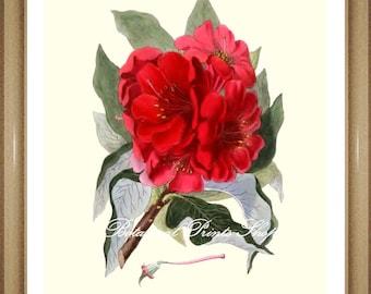 "Botanical Print. Flower Prints. Rhododendron Print. Flower Wall Art,  8x10"""