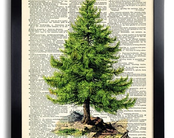 Tree Green Pine Holiday Nature Art Print Vintage Book Print Recycled Vintage Dictionary Page Collage Repurposed Book Upcycled Dictionary 220