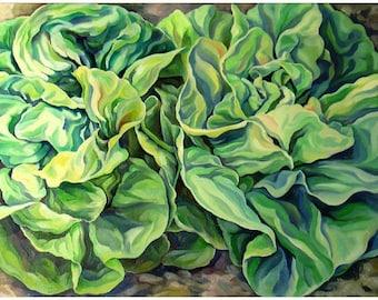 Lettuce - Lattuga - green - verde