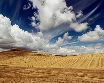 Landscape photograph, Tuscany photography, tuscan hills, Italy photography, Italian landscape. Val d'Orcia. Golden fields, blue sky, clouds.