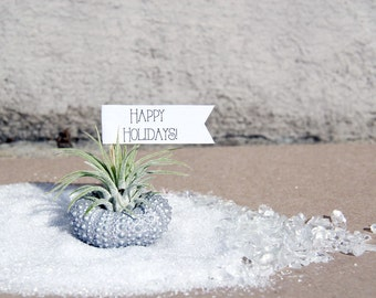 happy holidays // air plant tillandsia // robincharlotte holiday