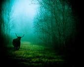 Fairytale Photography, Beast in the Woods, Longhorn Decor, Texas Photography, Fog, Rural, Magical, Blue and Green