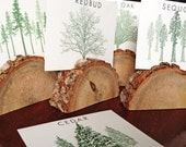 TREES Among the Forest Greeting Gift Cards Wedding Table Cards Woodsy Rustic Wedding Tree Types