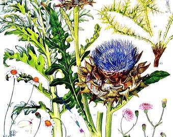 Mediterranean Flowers - Botanical Print - Vintage Flower Print 1988 p13
