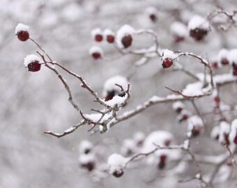 winter decor snow photograph nature photography fine art photography home decor office decor Christmas decor