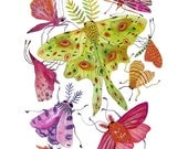 Luna Moth Print, watercolor reproduction, insects, moths butterfly illustrations, giclee print