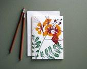 Pride of Barbados, pressed flowers, tropical plant, greeting card no.1191