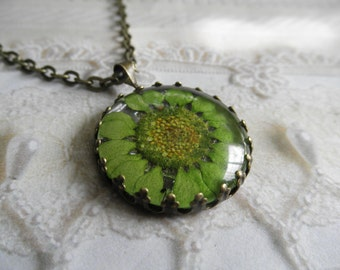 Lime Green Daisy Real Pressed Flower Bronze Crown Pendant Beneath Glass-Symbolizes Loyal Love,Innocence-Gifts Under 25-Nature's Wearable Art