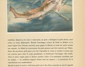 Dogfish Print, 1947, Wild Fish Print, Natural History, Home Decor, P 91, French Wild Animal Image, Anton Trieb, Frameable Art