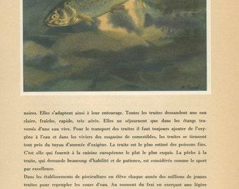 Common River Trout Print, 1947, Wild Fish Print, Natural History, Home Decor, P 83, French Wild Animal, Anton Trieb, Nursery Wall Art