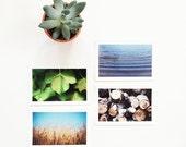 SALE SET 4 4x6 prints. Fine Art Photographic Natural History Print. Minimal simple style. Natural Home Decor. Indoor garden botanical