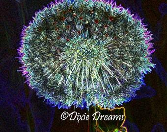 Dandelion fireworks metallic print Alaska