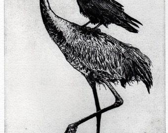 Raven artwork , Raven, crow,  black bird, Sandhill Crane , Aesop Fable,  etching