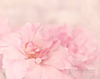 pretty in pink rose-flower photography -flower photo- cottage garden photography (5 x 7 Original fine art photography prints) FREE Shipping)
