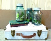 Live Moss Terrarium in an Antique Blue Mason Jar, with Skeleton Key - Mini Ecosystem