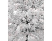 Snowy Tree Photo, Korean Mountain Ash, mpressionist Fine Art Photo, Maine Snowstorm,  Snow White Fantasy Photograph
