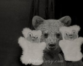 Bear Art Print, Black and White Art, Anthropomorphic, Hand Puppets, Vintage Photography, Mixed Media Collage