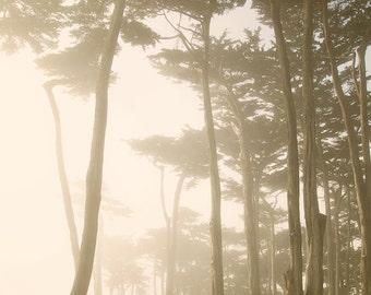 Fairy Forest, San Francisco, Forest Through the Fog, Dreamy California Coastal Landscape, 8x12 10x15 12x18 16x24 Fine Art Photograph