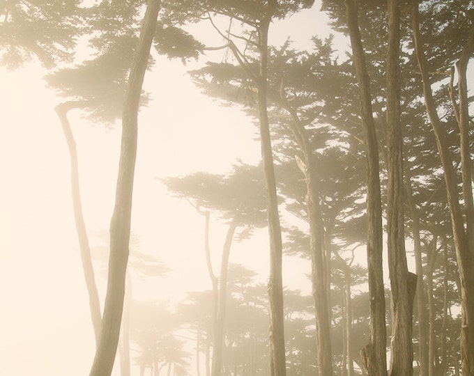 Fairy Forest, San Francisco, Forest Through the Fog, Dreamy California Coastal Landscape, 8x12 10x15 12x18 16x24 Fine Art Photograph