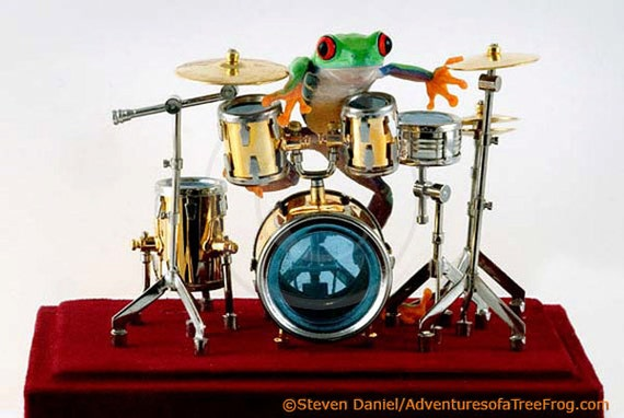 Drummer Frog Drum Photo, 8x10 Wall Art Print