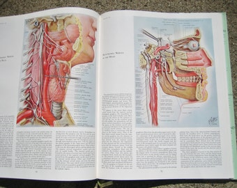 The Ciba Collection of Medical Illustrations Vol.1 Nervous System Frank H Netter  Book Paper Jacket 1968 Edition