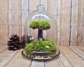 Tree of Life Terrarium Live Moss Fairy Garden Raku Fired Tree in Jar with Glow in the Dark Mushrooms- Handmade