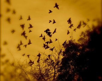 Nature Photography, Bird Photography, Austin, Texas, Dreamy, Surreal, Sky, fPOE, Dream Bird Orange Migration