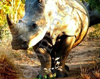 Rhino Safari Canvas Print