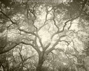 Tree Photography, California Live Oak, Tree and Light, Nature Art, Live Oak, Woodland Photo, O'Neill Park, Trabuco Canyon, California Nature