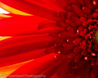 Large Red Print, Daisy Macro, Flower Photo, Macro Photography, Nature Photography, Red and Yellow, Red Home Decor, Red Wall Art, Large Art