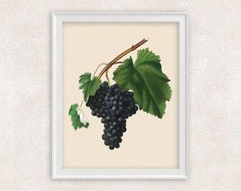 Black Muscat Grapes - Botanical Art - 8x10 PRINT - Wine Fruit - Kitchen Wall Art - Item #121
