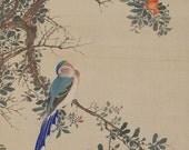 Antique Japanese Fine Art Wall Hanging Painting Bird and Flower Hanging Scroll Kakejiku -110912