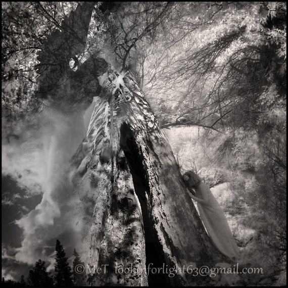 Surreal Photo Art | Tree Angel Photo Art | Infrared Photo Print | Sequoia Tree | Guardian Angel Art | Abstract Photo Montage | Photo Collage