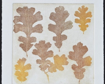 QUERCUS LOBATA No. 2, original copperplate etching, fine art printmaking, Valley Oak leaves in warm browns & yellow